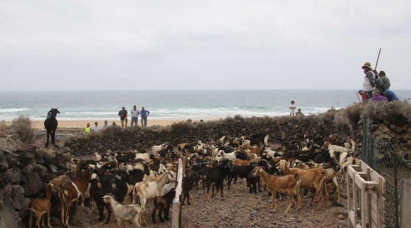La apañá en Fuerteventura. Una experiencia inolvidable