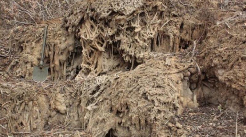 Un proceso geológico extraordinario experimentado en el Barranco del Calabozo en Guía